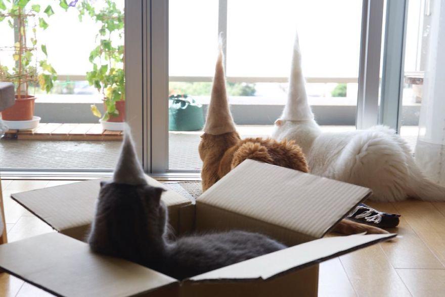 коты в колпаках из своей шерсти