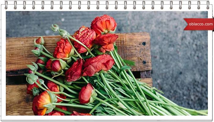 Категории мужчин - дарителей цветов