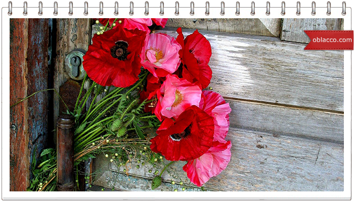 Память... прорастает цветами
