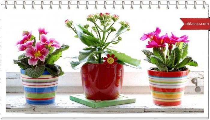 Какие цветы подойдут для оформления балкона