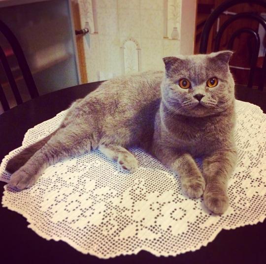 кот стейк