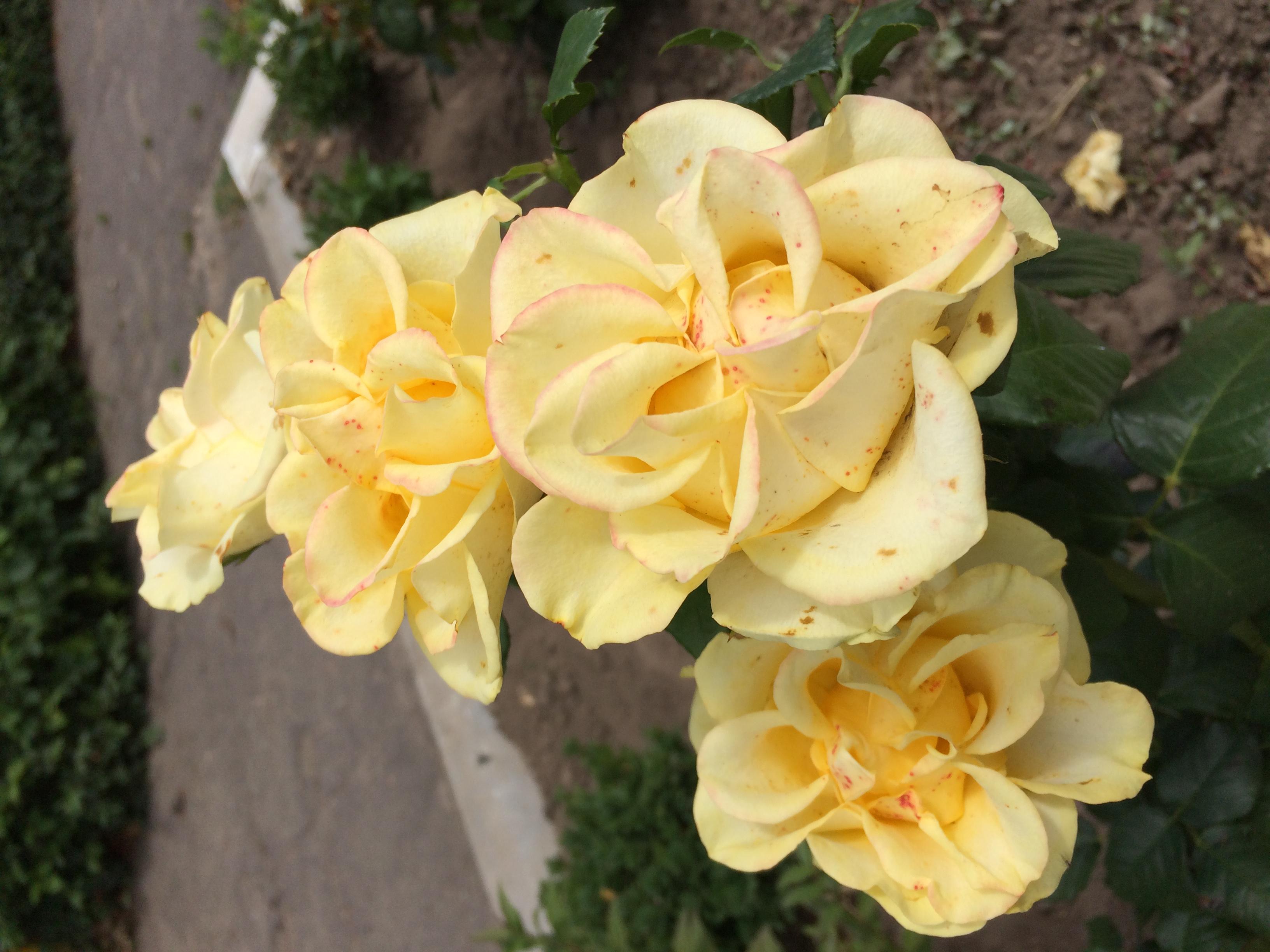 срочная доставка цветов в Киеве