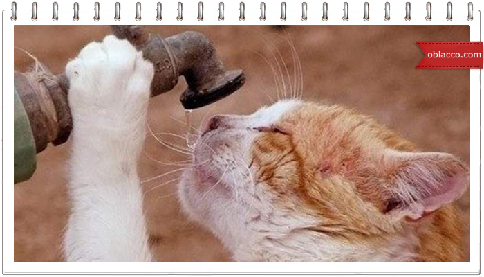 Кот, шланг, вода. Освежающий пост