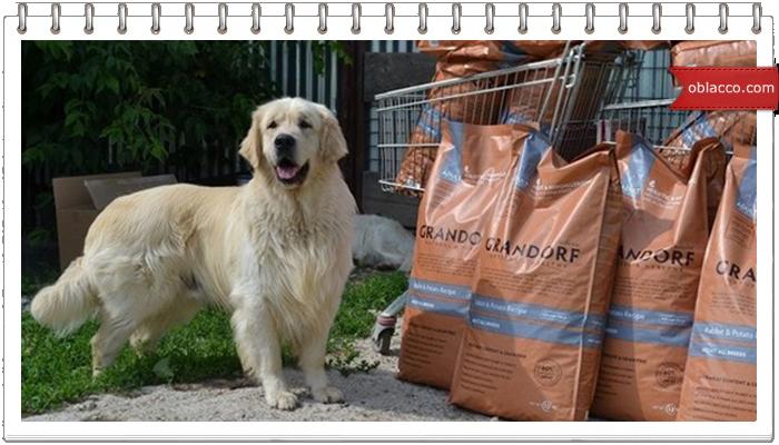 Особенности корма для собак класса холистик