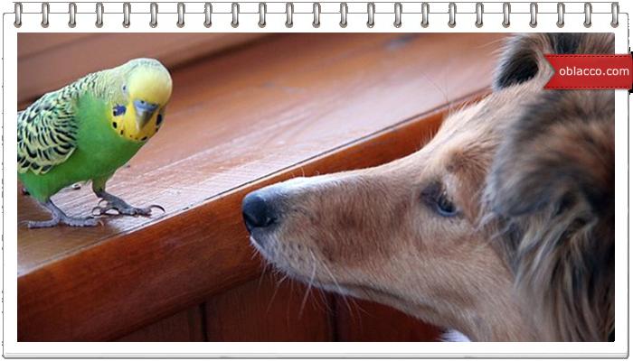 Попугай тренирует собаку