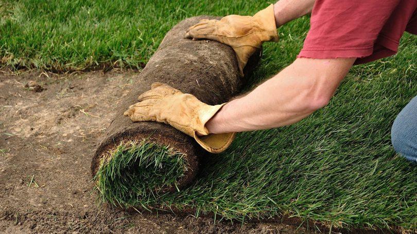 рулонная трава для газонов