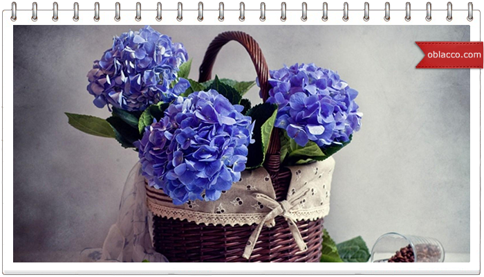 Кофе, цветы, цвета