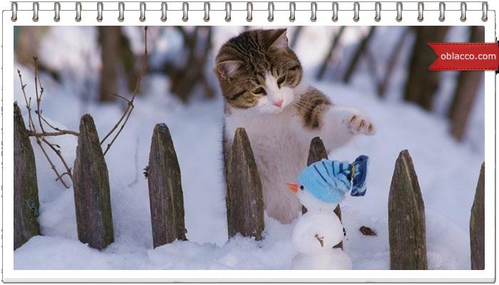 Коты-снеговики и коты И снеговики