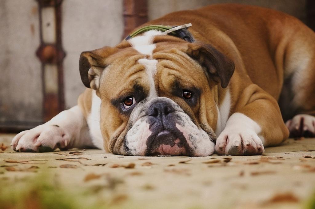 кастрация собак кобелей