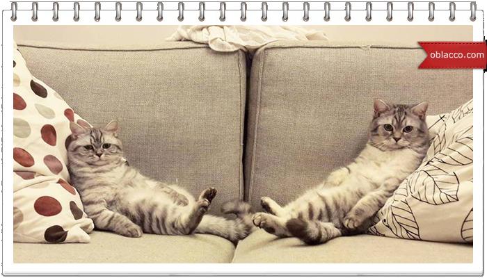 О диванах и котах