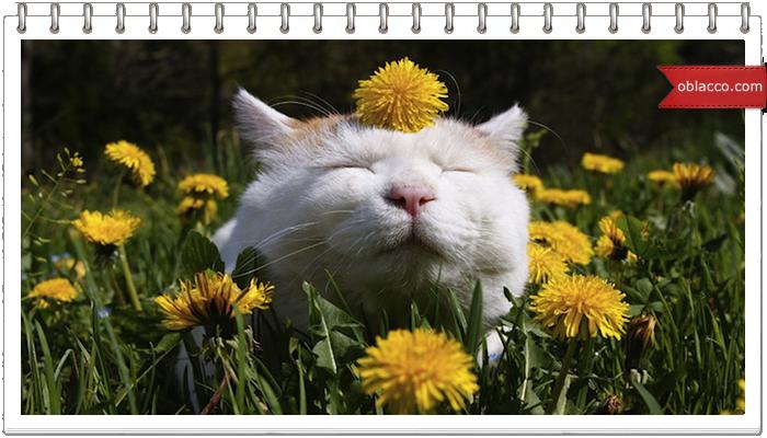 Аллергия у кошки. Что ее беспокоит