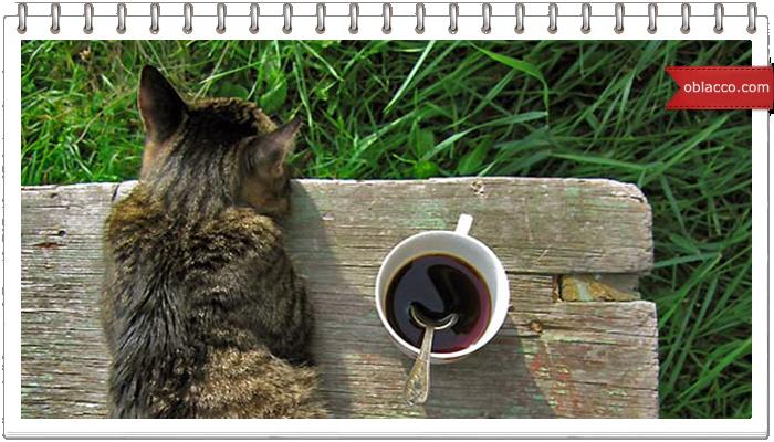 Начни с кофе