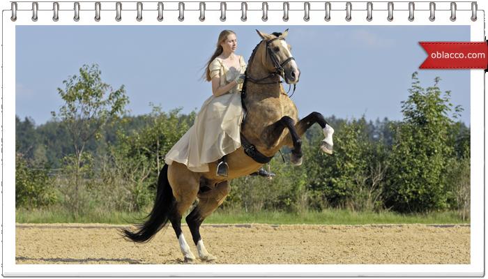 Конный спорт, как хобби