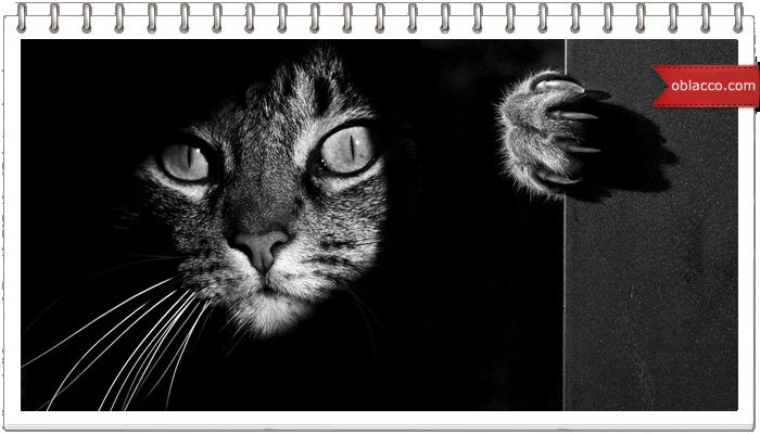Ночью все кошки серы