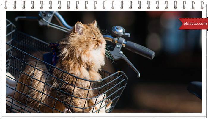 Кошки, лето, велосипед