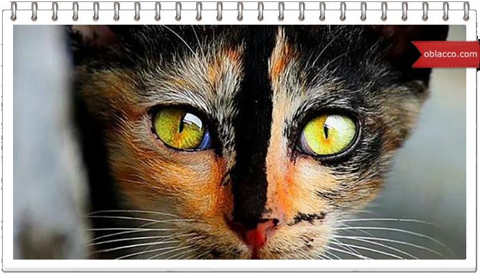 Необычный окрас у котов