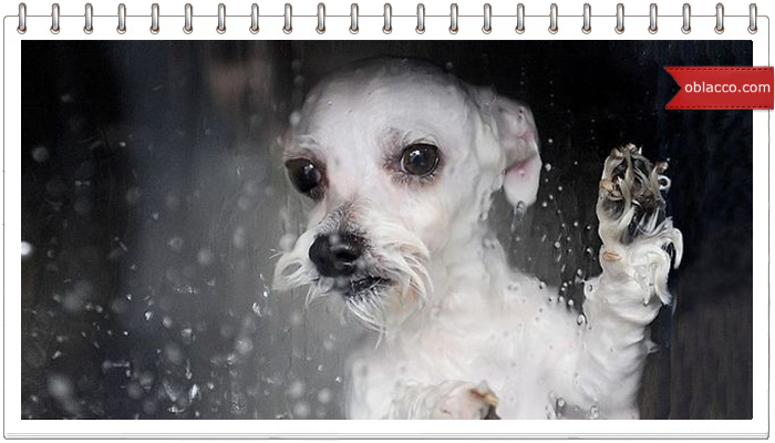 Собака моется на автомойке