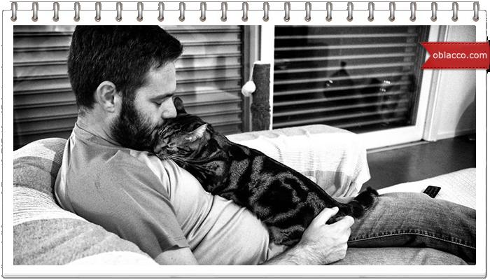 Мужчины и кошки