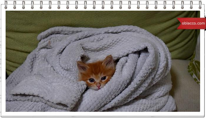 Кошки на ночь