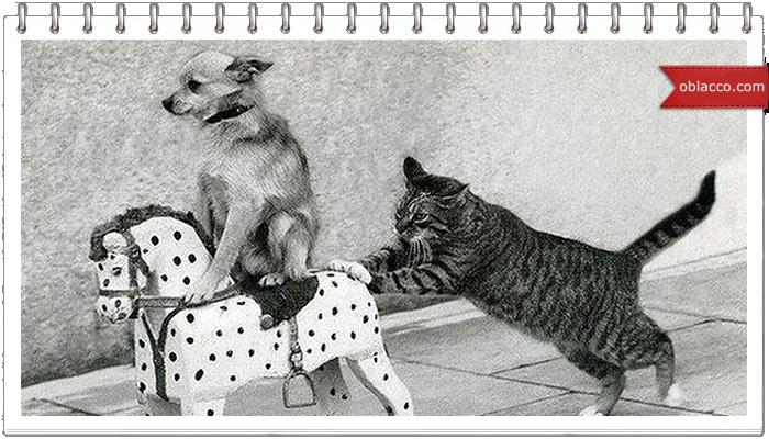 Собаки катают кота