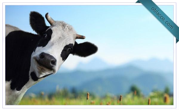 Где купить доильный аппарат на 2 коровы, чтобы не переплатить