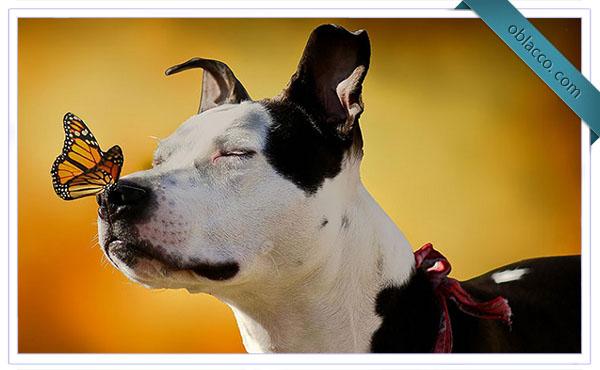 Собака и бабочка, на носу