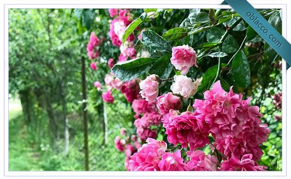 Цветы из путешествия