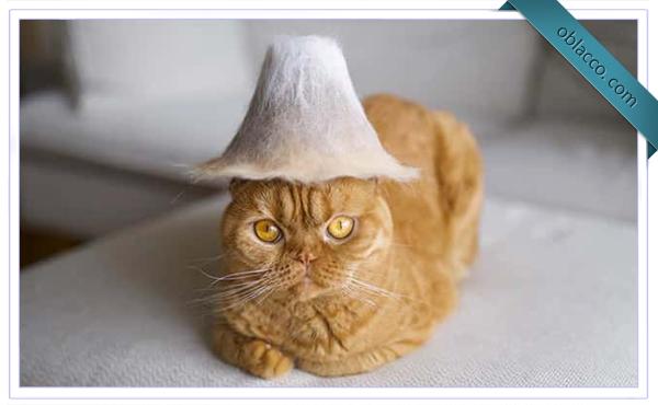 Коты в шляпах из собственной шерсти